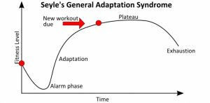 cms fitness courses - seyles general adaption syndrome