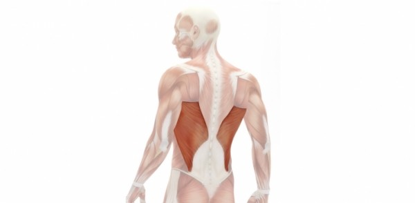 MUSCLE OF THE MONTH – LATISSIMUS DORSI
