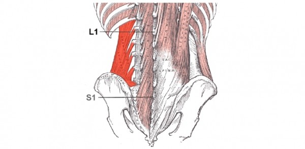 MUSCLE OF THE MONTH: QUADRATUS LUMBORUM