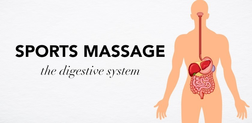 SPORTS MASSAGE – THE DIGESTIVE SYSTEM