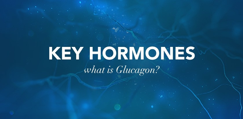 SPORTS MASSAGE: KEY HORMONES – GLUCAGON