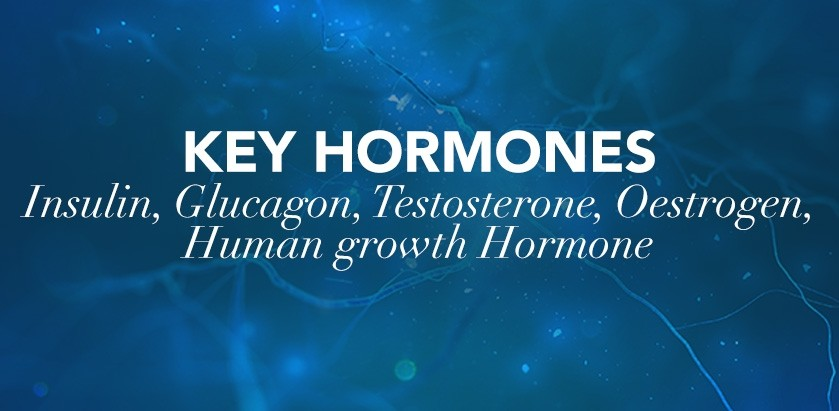 SPORTS MASSAGE: KEY HORMONES