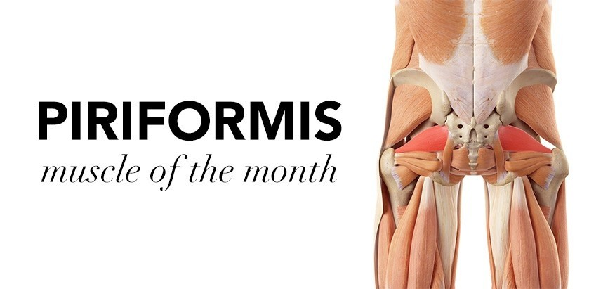 MUSCLE OF THE MONTH: PIRIFORMIS