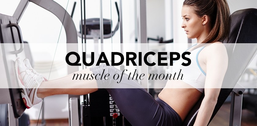 MUSCLE OF THE MONTH: QUADRICEPS