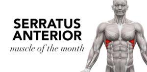 cms fitness courses - serratus anterior