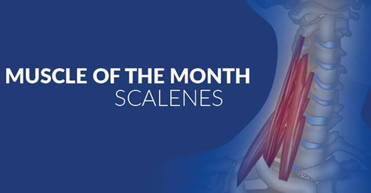 MUSCLE OF THE MONTH – SCALENES