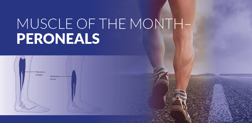 MUSCLE OF THE MONTH: PERONEALS