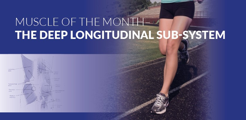 MUSCLE OF THE MONTH – THE DEEP LONGITUDINAL SUBSYSTEM