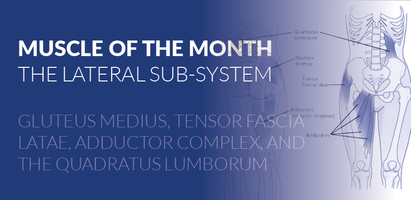 MUSCLE OF THE MONTH – LATERAL SUBSYSTEM