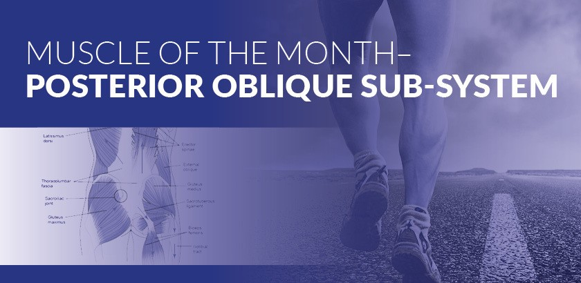 MUSCLE OF THE MONTH – POSTERIOR OBLIQUE SUBSYSTEM
